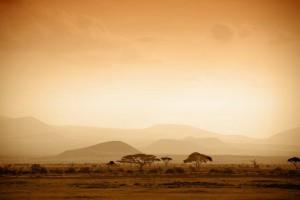 Le lever du soleil dans la savanne africaine